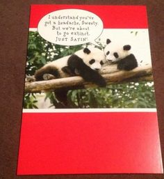New Valentines Day Card Humorous Panda Bear Sweethearts -  Sunrise Greetings | eBay