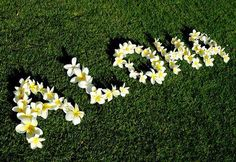 An easy peasy - could make thank you on the lawn?