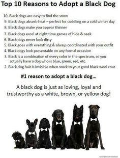 Reasons to adopt a black dog