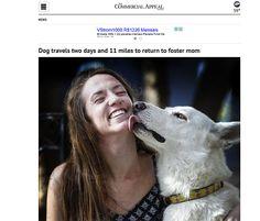 Uma história de amor entre o cachorro e sua dona tomou um rumo diferente após o cão viajar 17 km em dois dias para se reencontrar com a mulher que o havia adotado em um abrigo alguns dias antes.