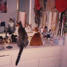 narcissistic kitties