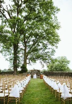 Ourdoor wedding ceremony under a big tree with gold chevalier chairs