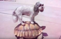 Amizades do mundo animal