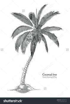 Coconut tree hand drawing engraving style