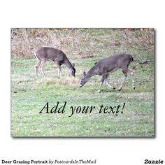 Deer Grazing Portrait Postcard