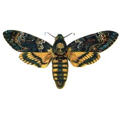 I think this would be nice for my left arm? I want this as my first tattoo. A deaths head hawk moth. Moth Tattoo Design, Skull Moth, Old Book Art, Deaths Head Moth, Sphinx, Hawk Moth, Insect Art, Vintage Colors, Tatoo