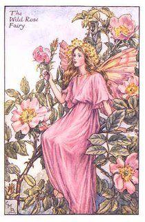 CICELY MARY BARKER  1895-1973 - The Wild Rose Fairy