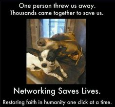 Adopt a shelter dog.
