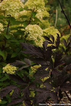 Versoja Vaahteramäeltä Herbs, Fruit, Garden, Plants, Garten, Lawn And Garden, Herb, Gardens, Plant