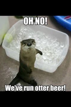 Image result for fabulous sea otters meme