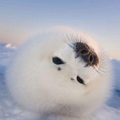 12 animaux adorables qui vont disparaître si rien n'est fait pour contrer le…