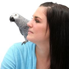 Before you let your parrot perch on your shoulder, follow these shoulder rules.