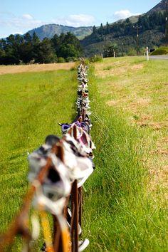 The shoe fence outside of Havelock, New Zealand