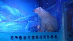 Polar bears, walrus calves, beluga whales, and wolves are languishing in a zoo with no natural light. Speak up today!