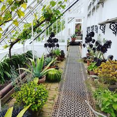 Just the most serene greenhouse I've ever seen. Miniature Greenhouse, Small Greenhouse, Greenhouse Plans, Lost Gardens Of Heligan, Diy Pergola, Pergola Garden, Earthship, Concrete Patio, Greenhouses