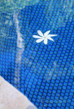 Pool reflection - Hawaii