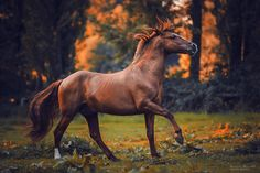Horse Photographer Carina Maiwald Finds Light in the Shadows Pretty Horses, Horse Love, Beautiful Horses, Animals Beautiful, Horse Photos, Horse Pictures, Image Film, Chestnut Horse, Equine Photography