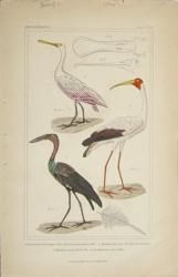 http://www.theoldmapman.com/prints/birdsp3.htm