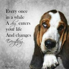 Every dog I meet changes my life.