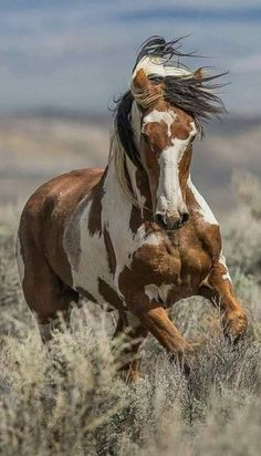 Love him - Belezza,animales , salud animal y mas Beautiful Horse Pictures, Most Beautiful Horses, All The Pretty Horses, Animals Beautiful, Cute Animals, Wild Animals, Horses And Dogs, Wild Horses, Wild Mustang Horses