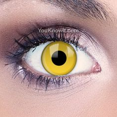 I want to build an entire great-horned-owl costume based on these eyes. Funky Eyes Yellow Contact Lenses