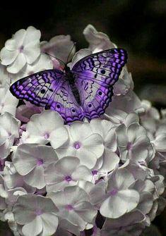 Purple Butterfly, Butterfly Flowers, Butterfly Wings, Butterfly Kisses, Papillon Violet, Art Papillon, Types Of White Flowers, Types Of Butterflies, Beautiful Bugs