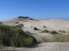 Sand dunes at the Oregon Dunes National Recreation Area, close to Reedsport (I have been here it is scary beautiful-austere wonderful) Southern Oregon Coast, State Of Oregon, Oregon Trail, Coos Bay Oregon, Oregon Dunes, Tillamook Oregon, State Parks, Us Road Trip, The Dunes