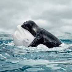 A little dolphin love and assistance.  Achie