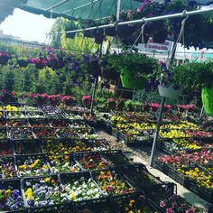 Planting time for houses and gardens