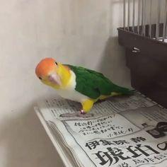 Funny Birds, Cute Birds, Pretty Birds, Cute Funny Animals, Cute Baby Animals, Beautiful Birds, Animals Beautiful, Animals And Pets, Cute Cats