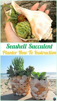 Gardening Ideas DIY Seashell Succulent Planter Instruction- DIY Indoor Succulent Garden Ideas Projects - DIY Indoor Outdoor Succulent Garden Ideas Projects and Instructions: Interior Design with Succulent Garden Planter Designs and Display Ideas Succulent Planter Diy, Diy Garden Projects, Succulent Landscaping, Creative Gardening, Succulents, Succulents Diy Indoor, Succulent Landscape Design, Indoor Succulent Planter, Succulent Garden Indoor