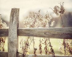 Rustic Decor Golden Country Landscape Fence Photograph Art for Living Room Yellow Photography Yellow Wall Art Farmhouse Fence Picture. USD) by LisaRussoFineArt Frames On Wall, Framed Wall Art, Wall Art Decor, Canvas Wall Art, Room Decor, Farmhouse Wall Art, Country Farmhouse Decor, Rustic Decor, Farmhouse Style