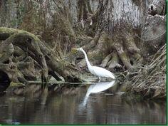 The Silver River, Ocala, Florida