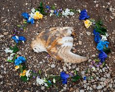 At Rest, Emma Kisiel. The artist wanted to commemorate the lives of wild animals hit and killed by cars