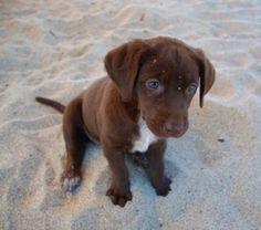 such a pretty pup