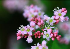 Buckwheat Seeds About 30 Seeds by Greenworld1 on Etsy