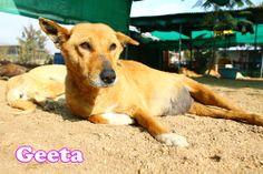 Sweetheart Geeta is so calm that you want to spend more/extra time with her to make yourself feel good and calm.