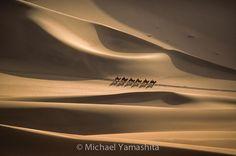Camels cross the Singing Sand Dunes of #Dunhuang #Gansu #China. #desert #camel @natgeo @natgeocreative @thephotosociety by yamashitaphoto