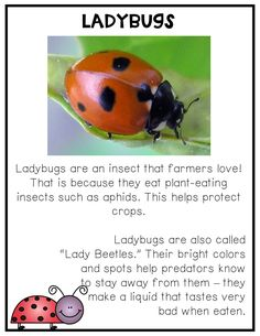 learning about insects! Kindergarten Science, Elementary Science, Teaching Science, Science For Kids, Insect Activities, Social Studies Activities, Science Activities, Play Based Learning, Kids Learning