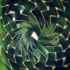 Weave   #palm #jungle