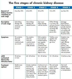 The Five Stages Of Chronic Kidney Disease