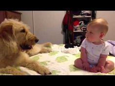 """""""Hadley sits up on her own! - This dad's attempt to get a video of his daughter Hadley learning to sit up took a furry turn when doggie decided she needed to get in on the action too. Good thing Hadley likes kisses."""" : ivillage  http://www.ivillage.com/viral-video-doggie-kiss/6-a-543401?obref=obnetwork"""