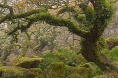 Resultado de imagem para professional photographs of nature
