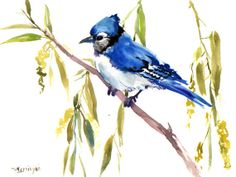 Blue Jay on Willow, Original watercolor painting, 12 X 9 in, blue green white, watercolor birds, bird lover---this artist only sells originals