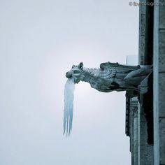 Gargouille glacée de Notre Dame – SoyPhotography