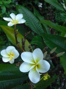 #Makawao Morning   #Maui #Hawaii