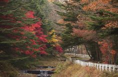 Karuizawa, Japan - Fall 2008