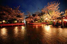 京都市東山区にある祇園白川の夜明け前の桜と雨。雨に濡れて風情ある石畳。夜明け前の薄暗い情景に光る桜と石畳。2016年4月4日訪問、撮影。