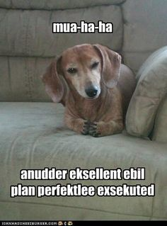 Evil weiner dog is up to something