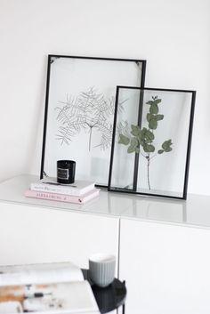Floating Frame Herbarium // Gepresste Pflanzen im schwebenden Bilderrahmen // Botanik für dein Zuhause // DIY: Schwebender Bilderrahmen